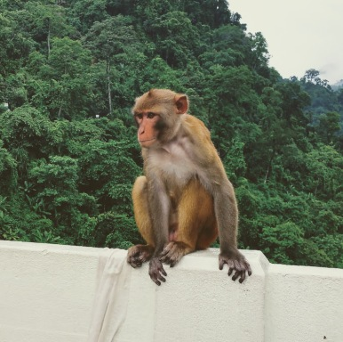 Waiting for cucumber that we fed this monkey
